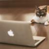 パソコンを見ている猫