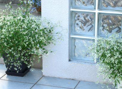 夏の玄関と花