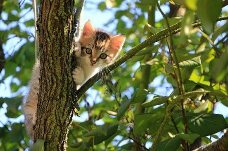 木に登っている子猫