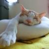グッスリと眠っている猫