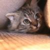 怖がって隠れている猫