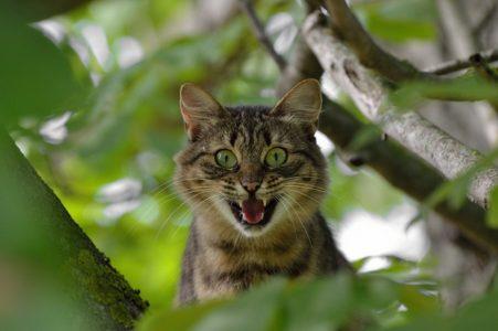 怖い顔をした猫