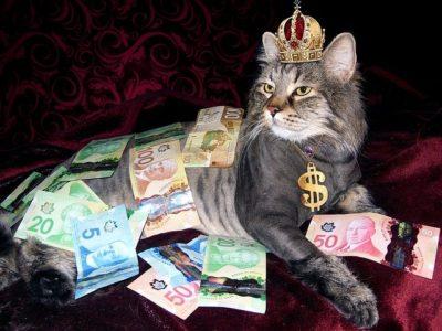 お金に囲まれる猫
