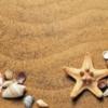 貝殻がたくさんの砂浜